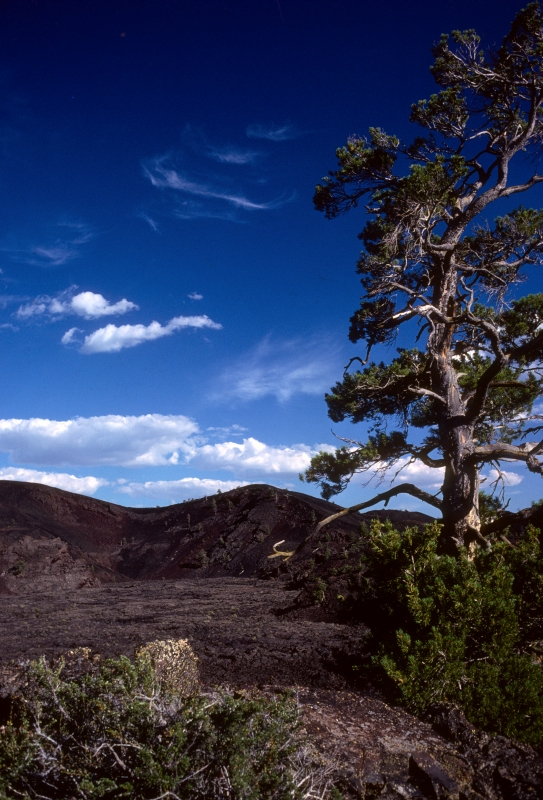 North Crater Cinder and a lone Limber Pine