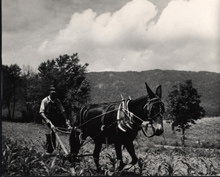 farmer with Cumberland Mountain in background