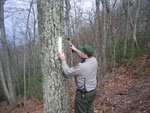 Park Ranger marks boundary near Fern Lake