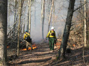 firefighters working to suppress wildland fire