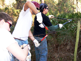 Cumberland Island volunteers removing a wire fence