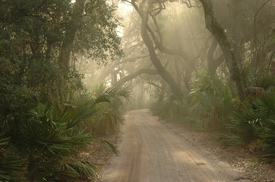 Image of main road surrounded by maritime forest with sun beams shining through