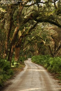Grand Avenue runs the length of Cumberland Island, North to South and provides access to most of the Islands' interior.
