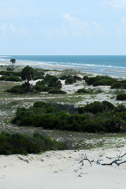 undeveloped beach on a sunny day; sand dunes with vegetation