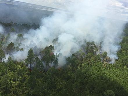Cumberland Island Whitney Fire at 102 acres - Cumberland