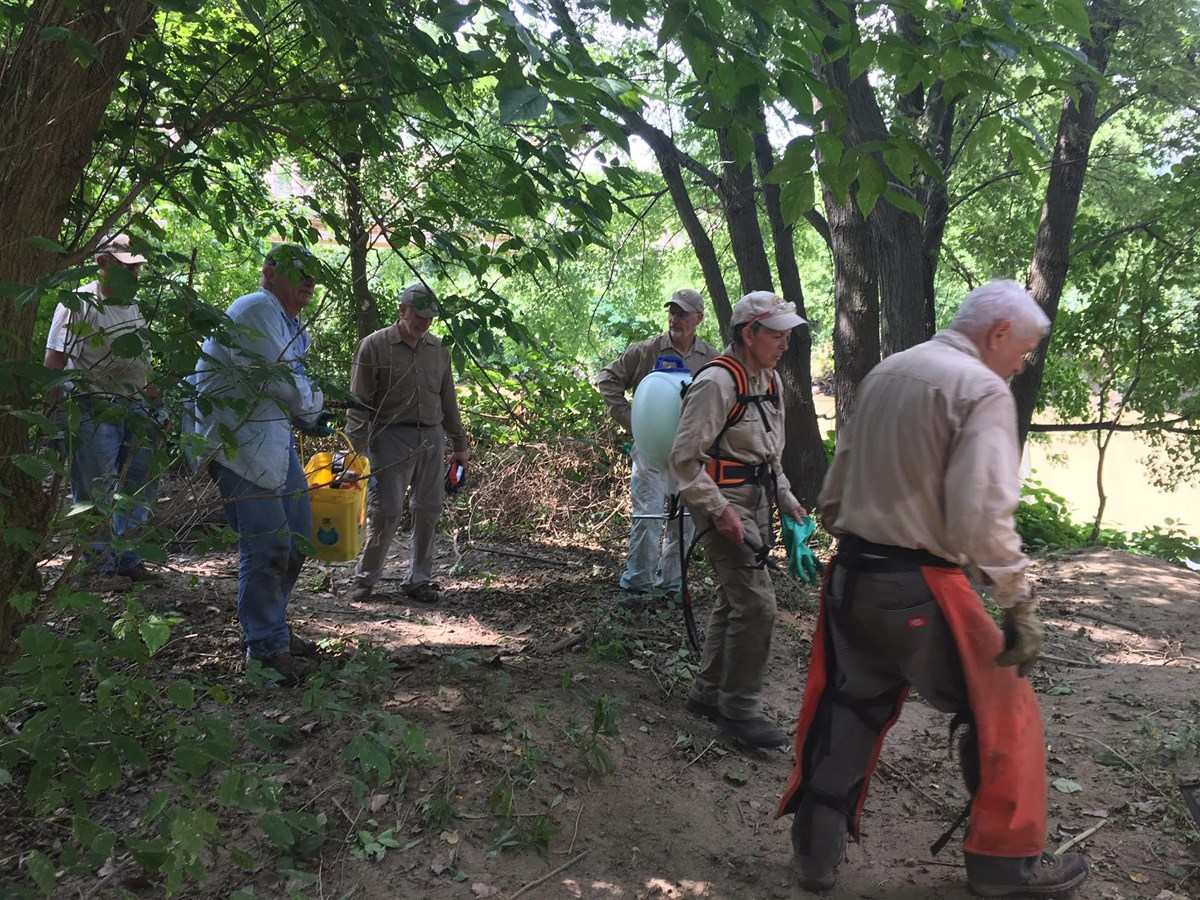 A group of volunteers carry tools in a forested area to remove invasive species.