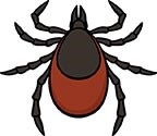 illustration of a tick