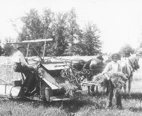 Wheat threshing with horse-drawn equipment.