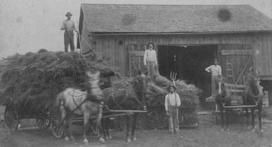 Historical photo of four farmers unloading hay from two wagons each drawn by two draft horses with a very large pile of hay and a large barn in the background.