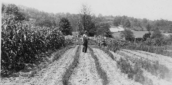 Historical photo of Eugene Cranz working in his field.