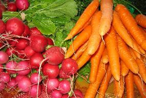 Carrots and radishes.