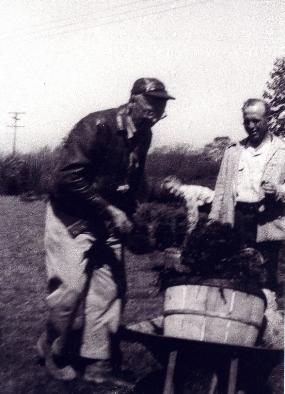 Fred Boucek working in tree nursery, 1951.