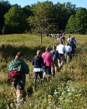 A large group of visitors hiking in a meadow