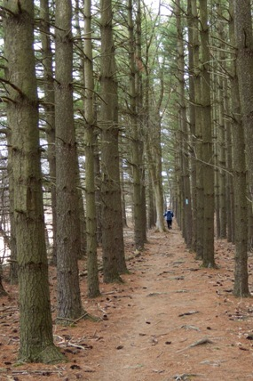 trail thru evergreens d j reiser