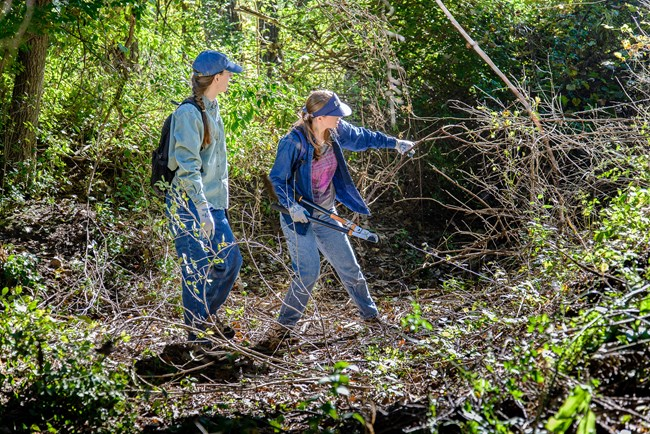 Two young white women in denim clothes, work gloves, and ballcaps stand in a woody green tangle of shrubs and vines. The first reaches out to grab a branch in one hand and holds loppers in the other.