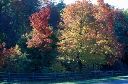 CVNP_fall_leaves_on_trees_changing_colors_Tom_Jones