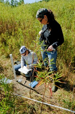 Two Scientists collect samples of species in the wetlands of CVNP.