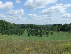Tree Farm Trail View