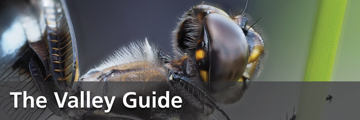 "A close up image of a dragonfly's face, depicting its head, eyes, body, and wings in great detail. Accompanied with the image is text which states: ""The Valley Guide""."