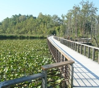 Beaver Marsh & Boardwalk in summer