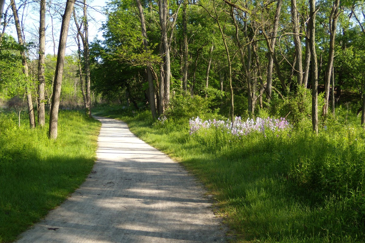 The Towpath Trail through the woods in the spring.