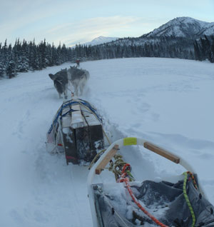 sled dogs pulling a pile of lumber down a snowy trail near forest and mountains