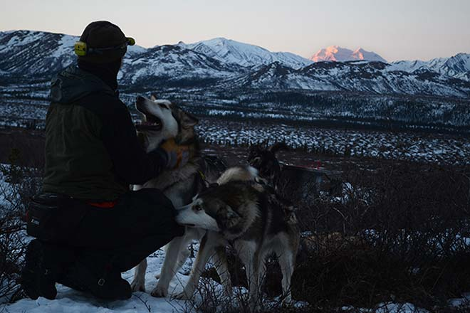 a person with two grey-colored huskies, looking out over a snowy forest and distant, snowy mountains