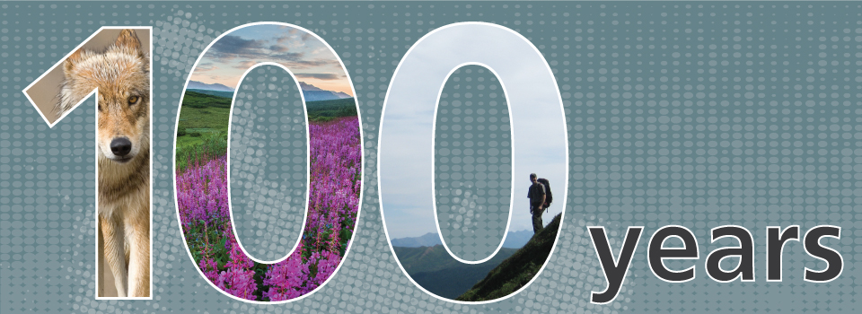 a graphic showing the words 100 years, with a wolf, pink flowers and a hiker pictured within the numbers 1, 0 and 0
