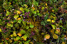 Tiny, delicate, and colorful plants interlace as tundra