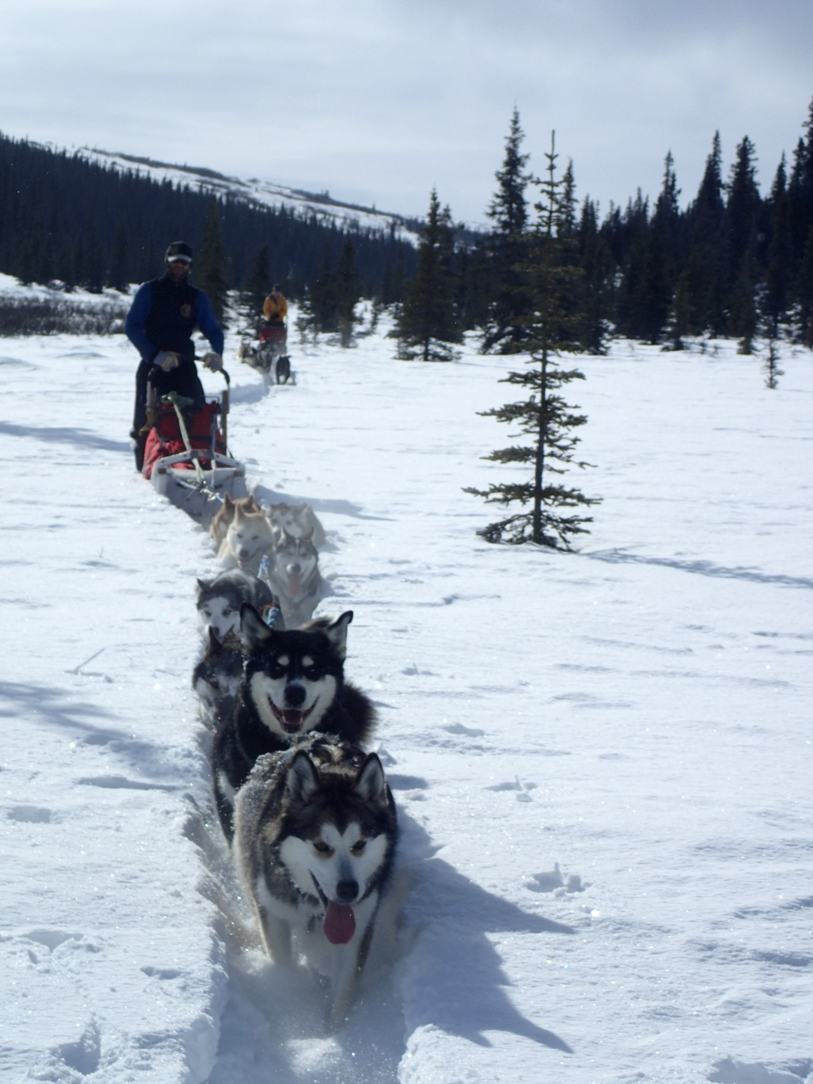 team of sled dogs pulling a sled through snow
