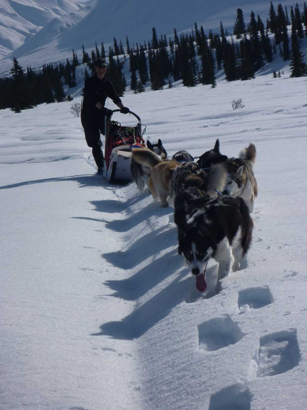 female ranger mushing a team of dogs in snow