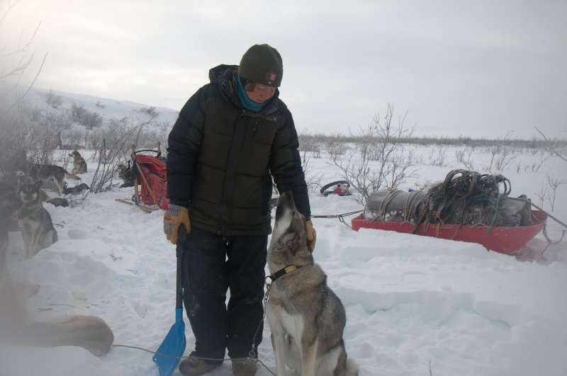 musher and dog and barrels