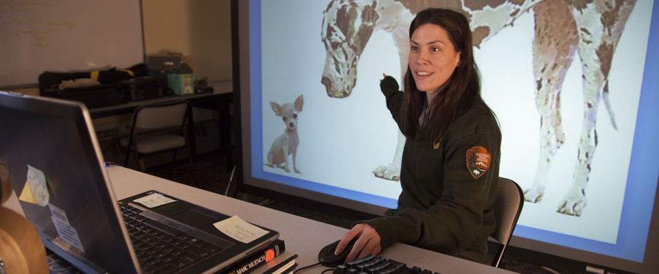 a ranger points to a presentation of dogs while using a computer