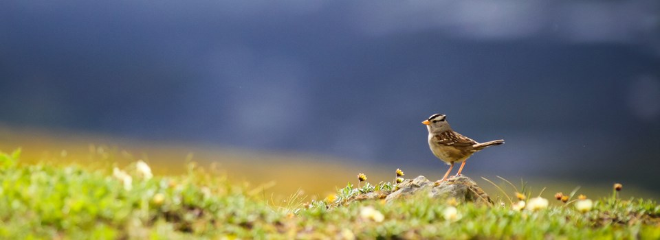 Small songbird stands on ground