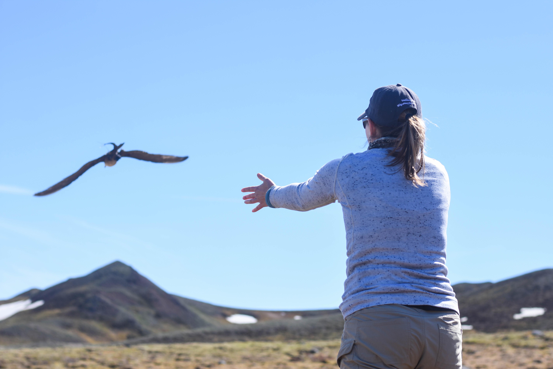 Researchers releases captured bird