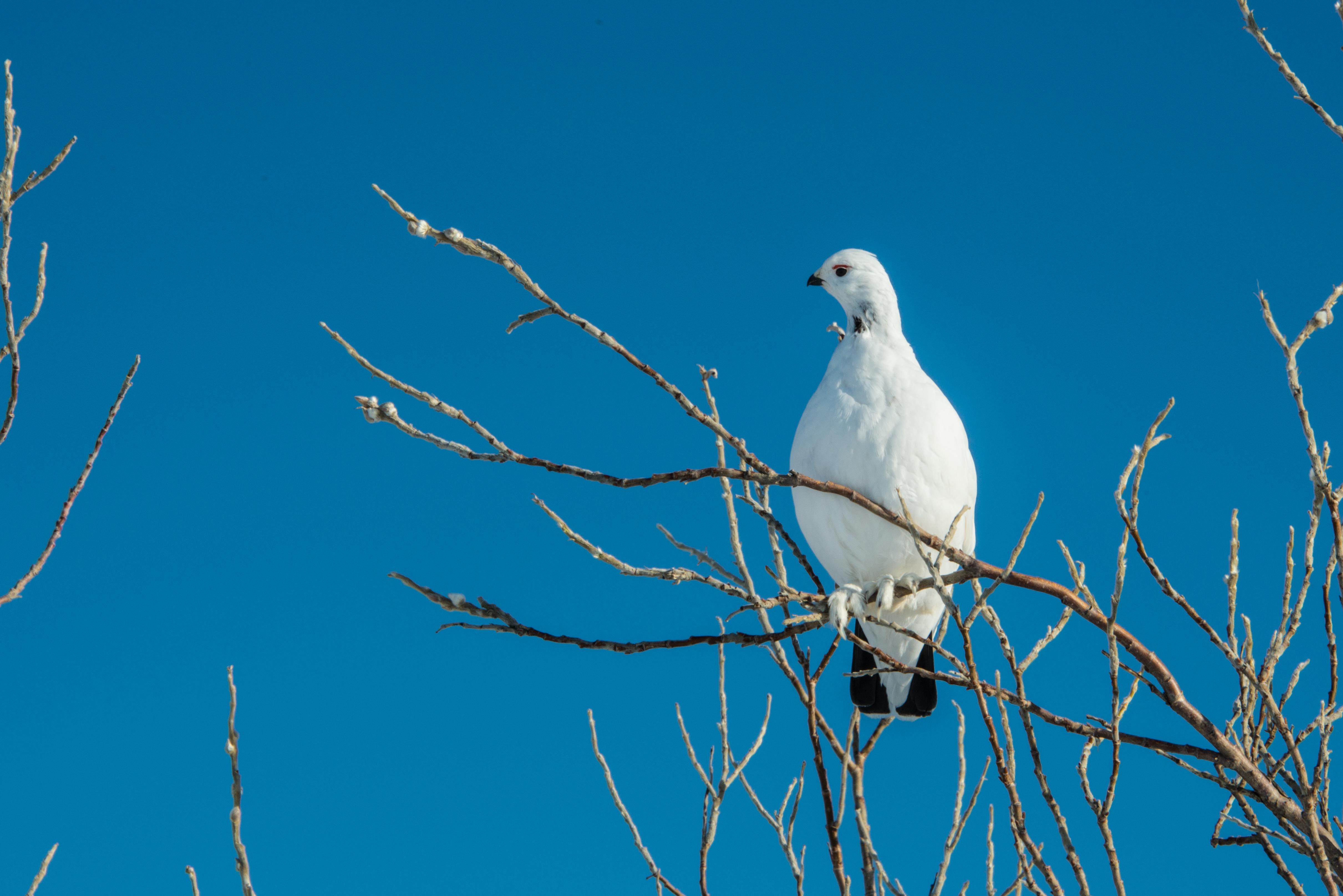 White bird perches in tree