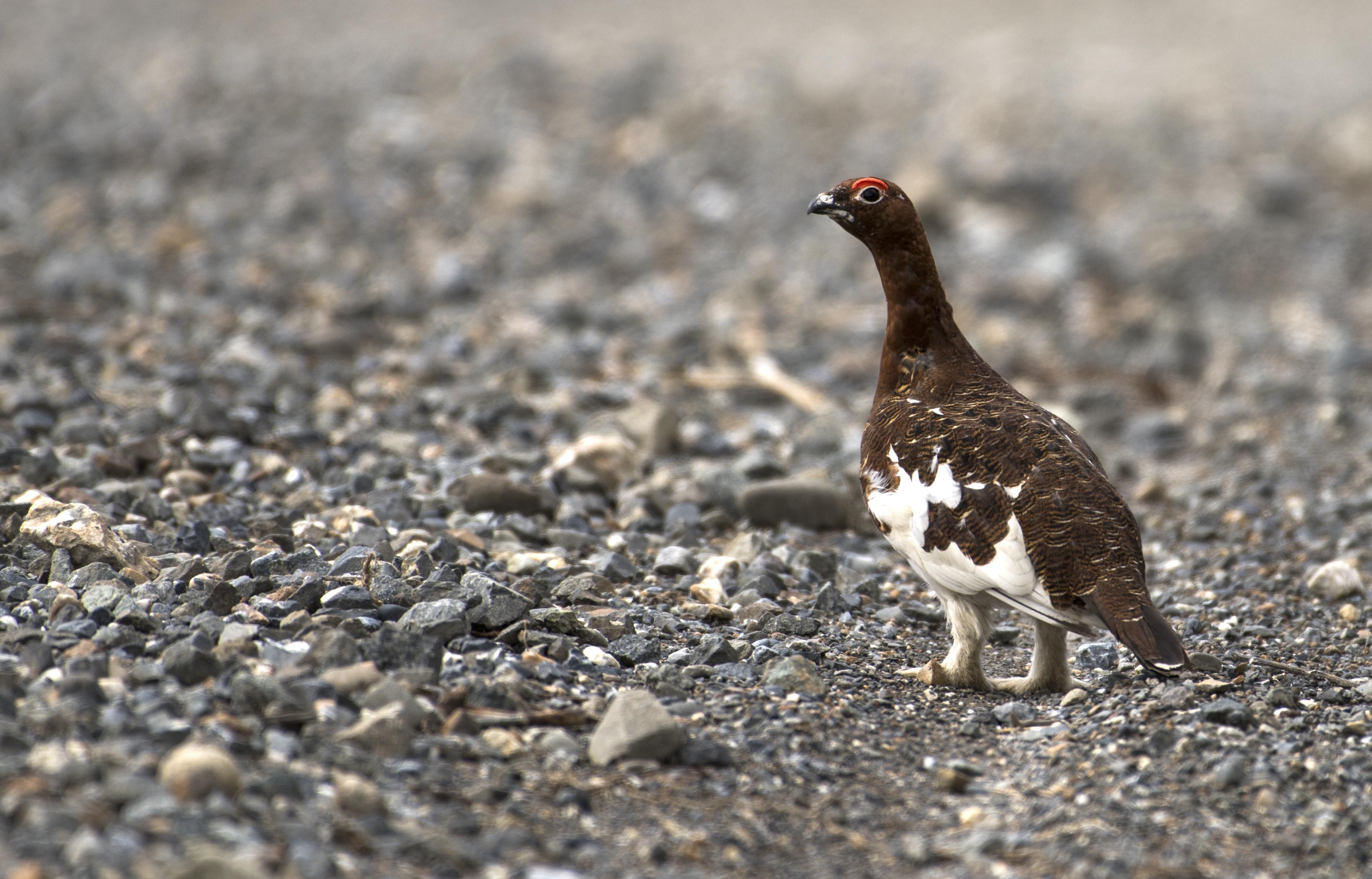 Bird stands on gravel roadside