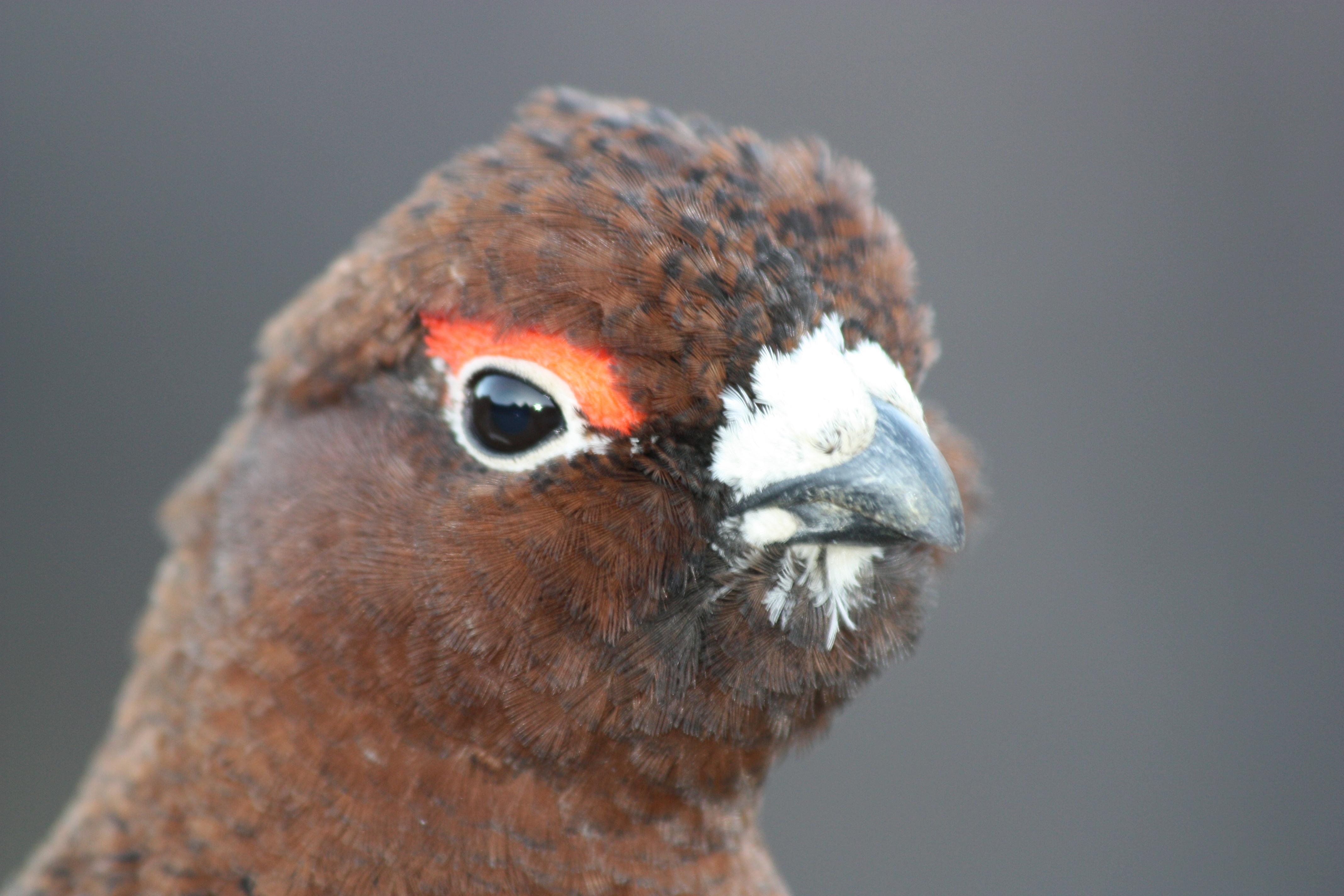 Close view of bird's profile