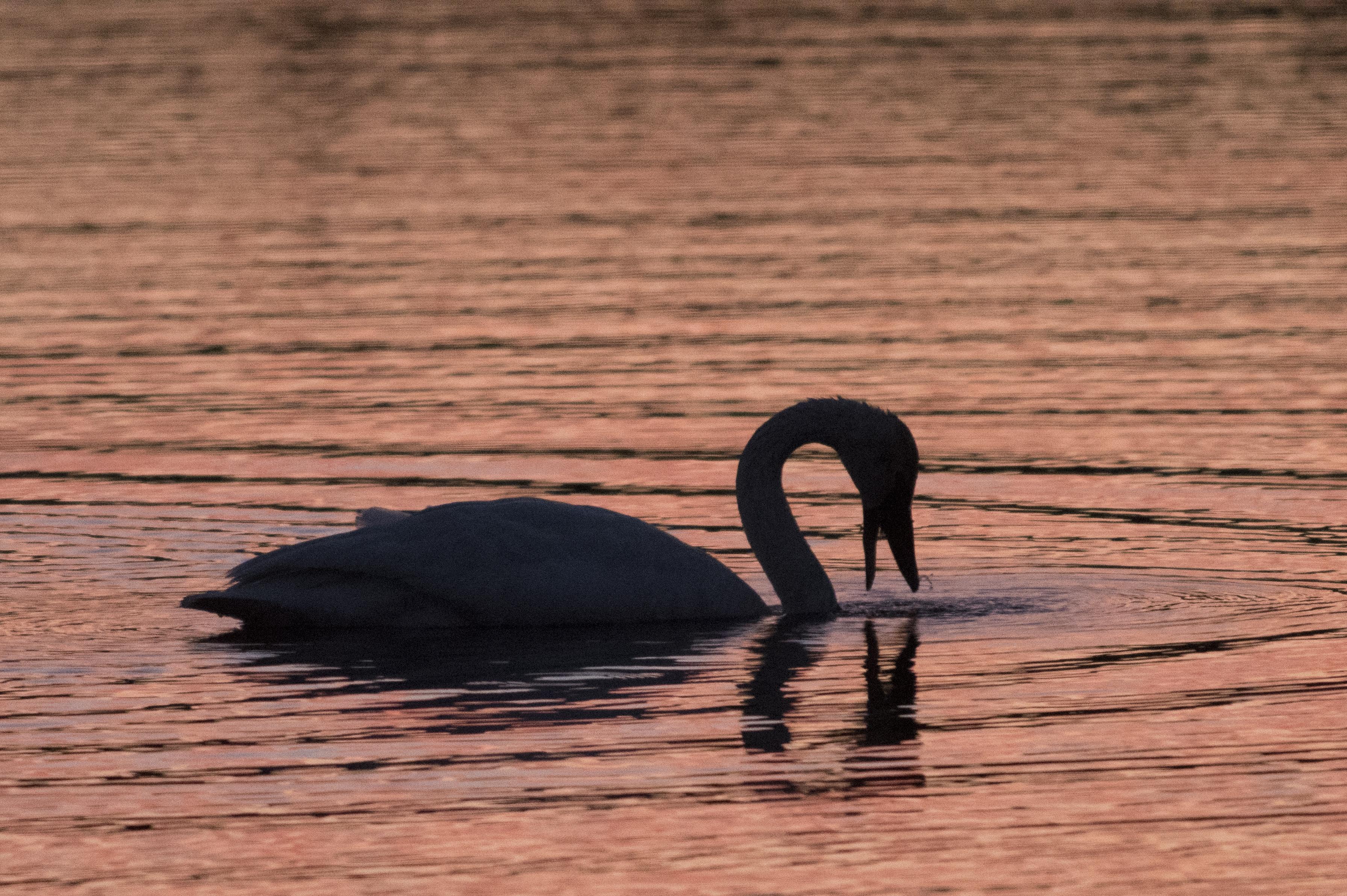 Bird dips head into water