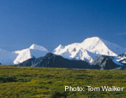 A clear day in Denali.