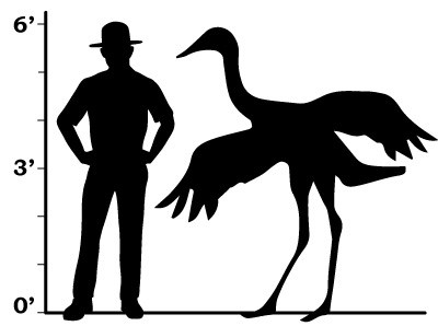 a comparison between a crane and a ranger that show they are of a similar size