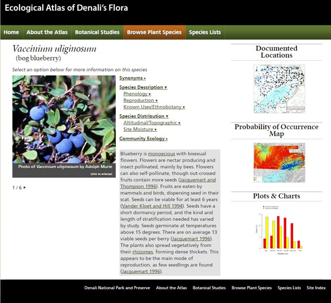 screenshot of a webpage with a picture of blueberries and text describing the ecology of the plant