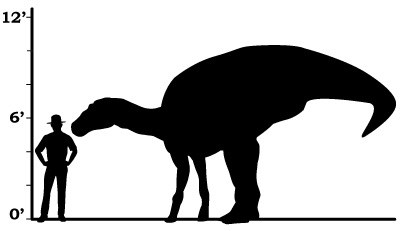 a size comparison between a ranger and an edmontosaurus