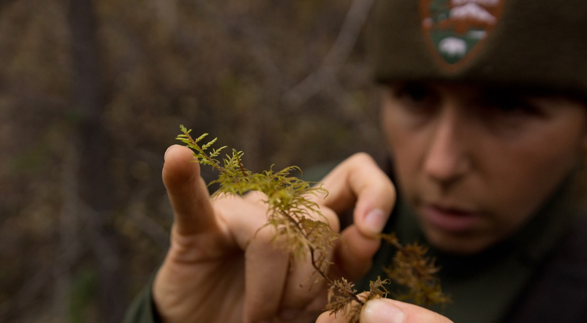 a ranger uses her little finger to point to fine pieces of moss