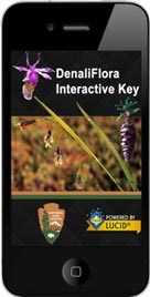 a smartphone displaying the splash screen for a plant id app with the words denaliflora interactive key
