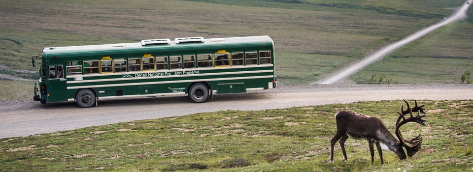 a bus of visitors watches a caribou