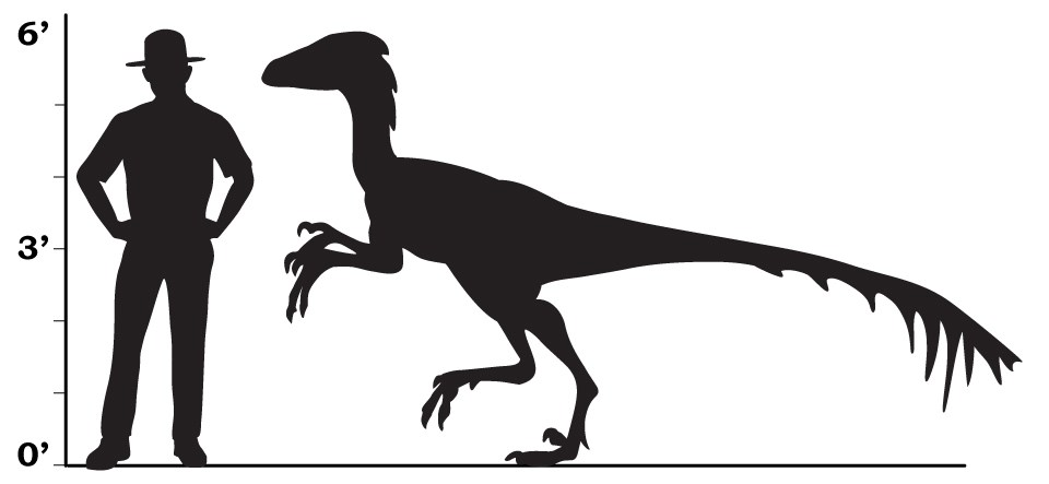 a size comparison that shows a park ranger and a troodon were about the same height