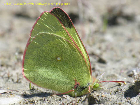 butterfly on sandy ground