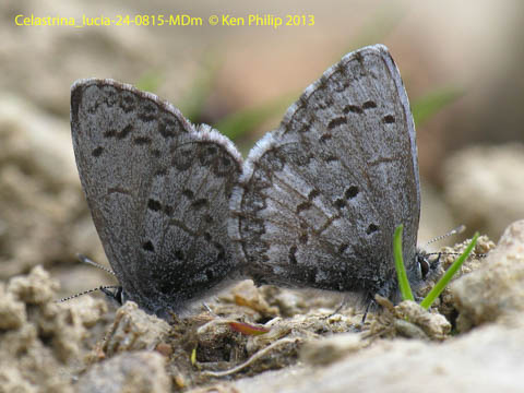 2 butterflies on sandy ground