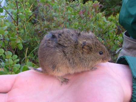 Student holding a vole